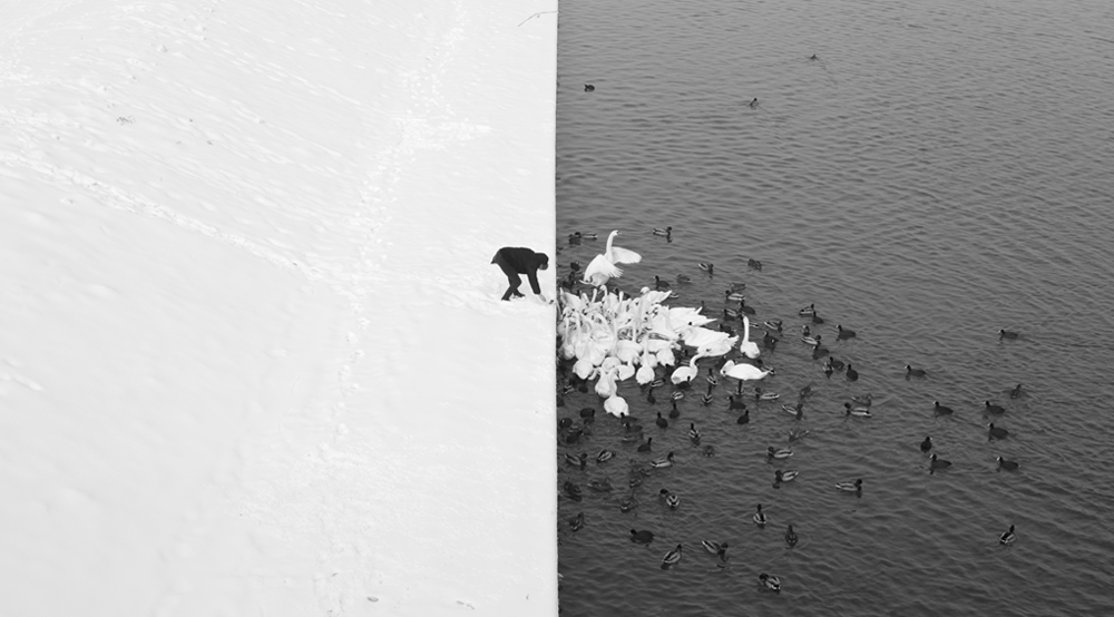 Marcin Ryczek - A Man Feeding Swans in the Snow. Nature: Other - 1st Place, Gold Star Award.