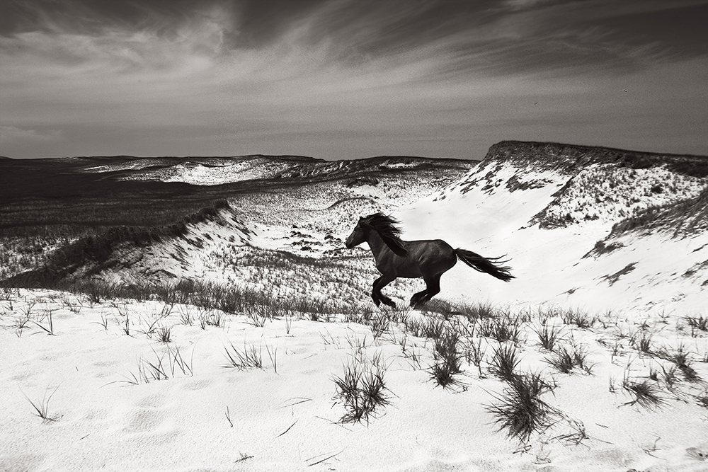 Drew Doggett - Discovering the Horses of Sable Island. Nature: Wildlife - 2nd Place, Silver Star Award.