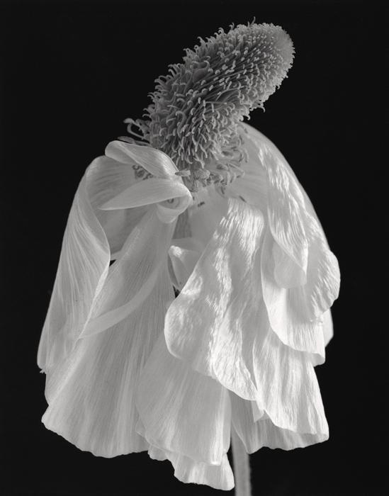 © Dominique Bollinger Flowers - madame fleur - 2008