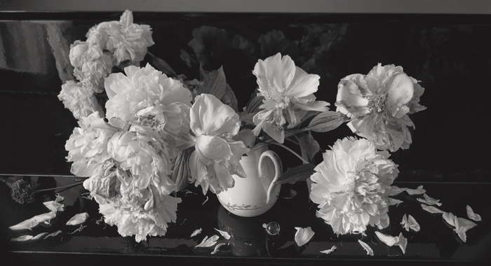 © Dominique Bollinger Flowers - pivoines - 1998