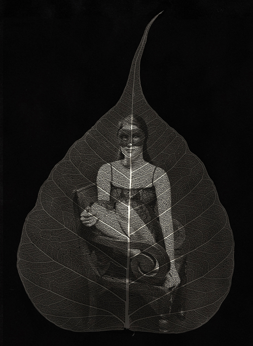 © Ted Preuss Observing - Leaf