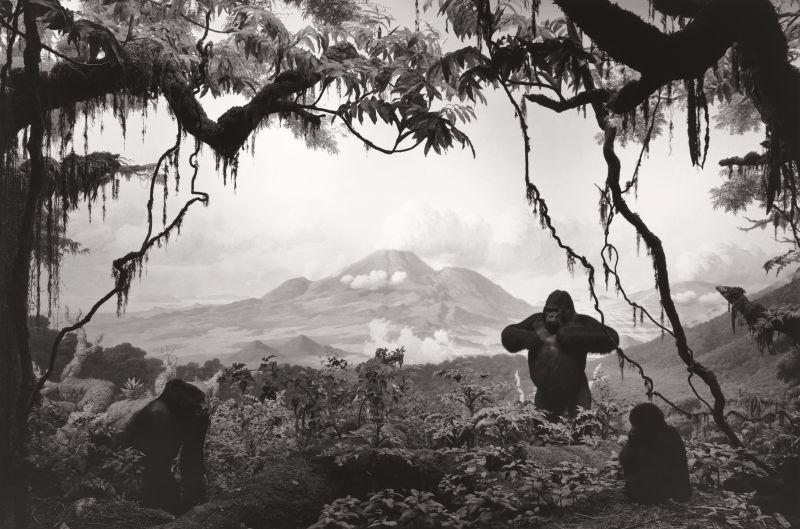 Sugimoto-Gorilla_1994-Damiani