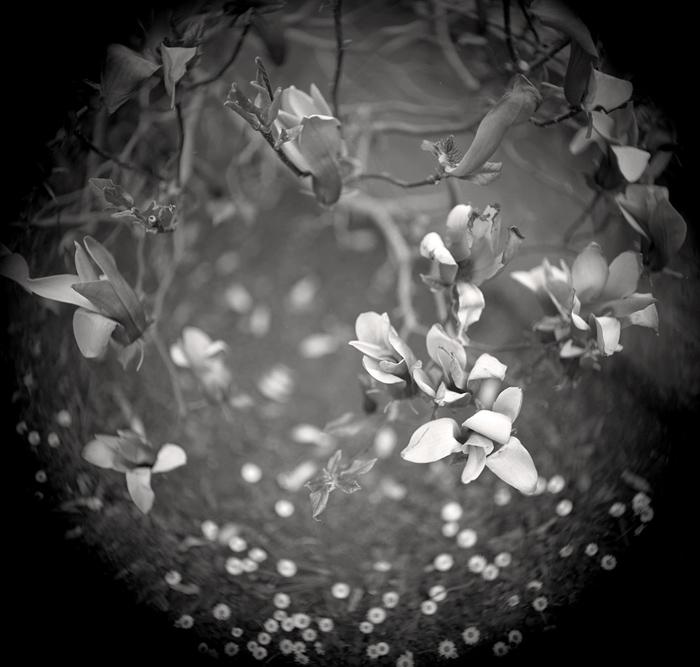 © Dominique Bollinger The garden - Magnolia - 1997