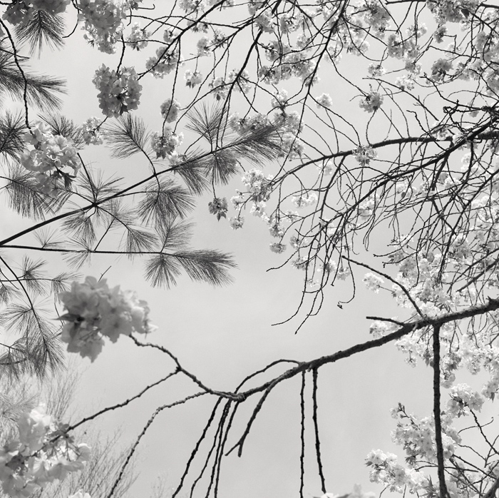 © Dominique Bollinger The garden - Ninfa 1 - 1997