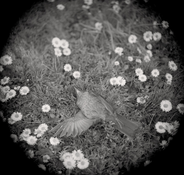 © Dominique Bollinger The garden - merle - 1998