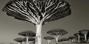 Mesmerizing photographs of the world's most majestic ancient trees.