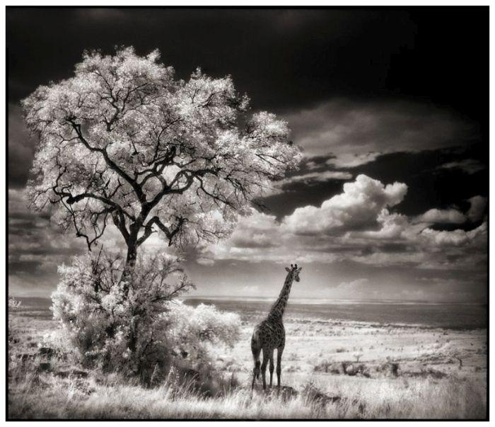 © Nick Brandt