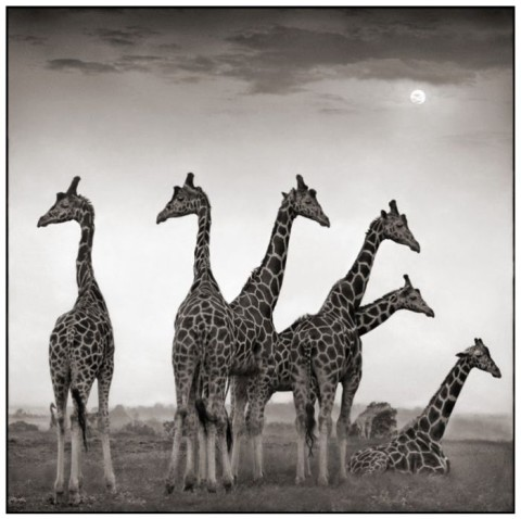 Biography: Wildlife photographer Nick Brandt