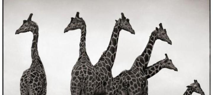 Biography: Wildlife photographer Nick Brandt