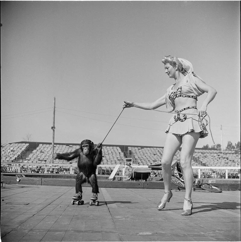 Circus Woman With Rollerskating Monkey – 1948