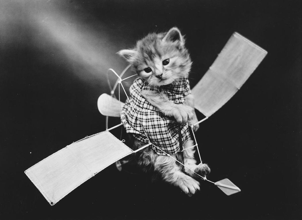 Cats-and-Dogs-Dressed-as-People-01
