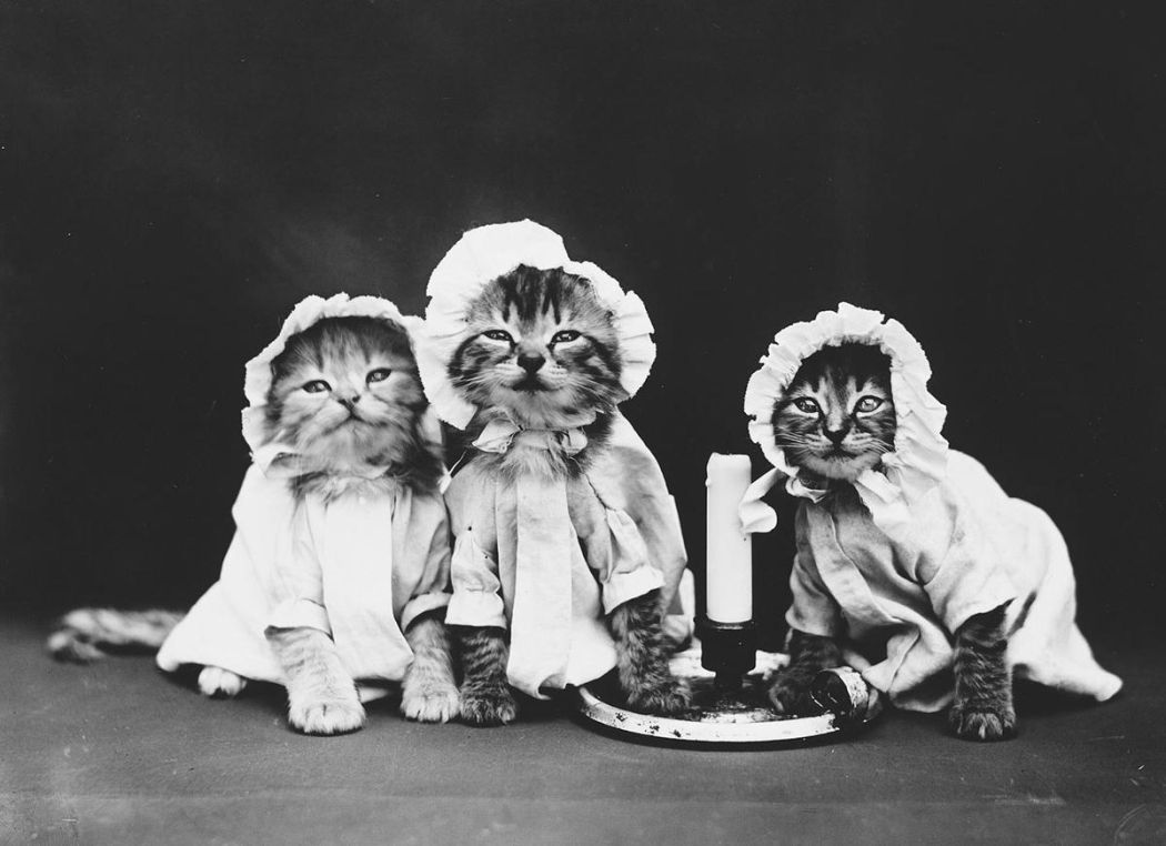 Cats-and-Dogs-Dressed-as-People-04