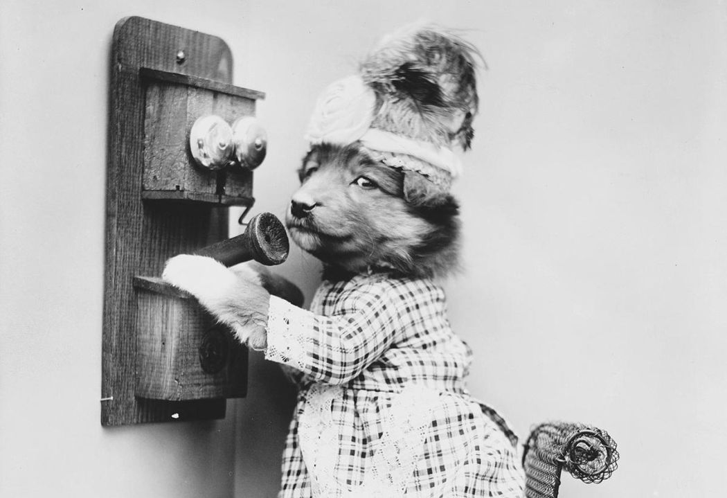 Cats-and-Dogs-Dressed-as-People-05