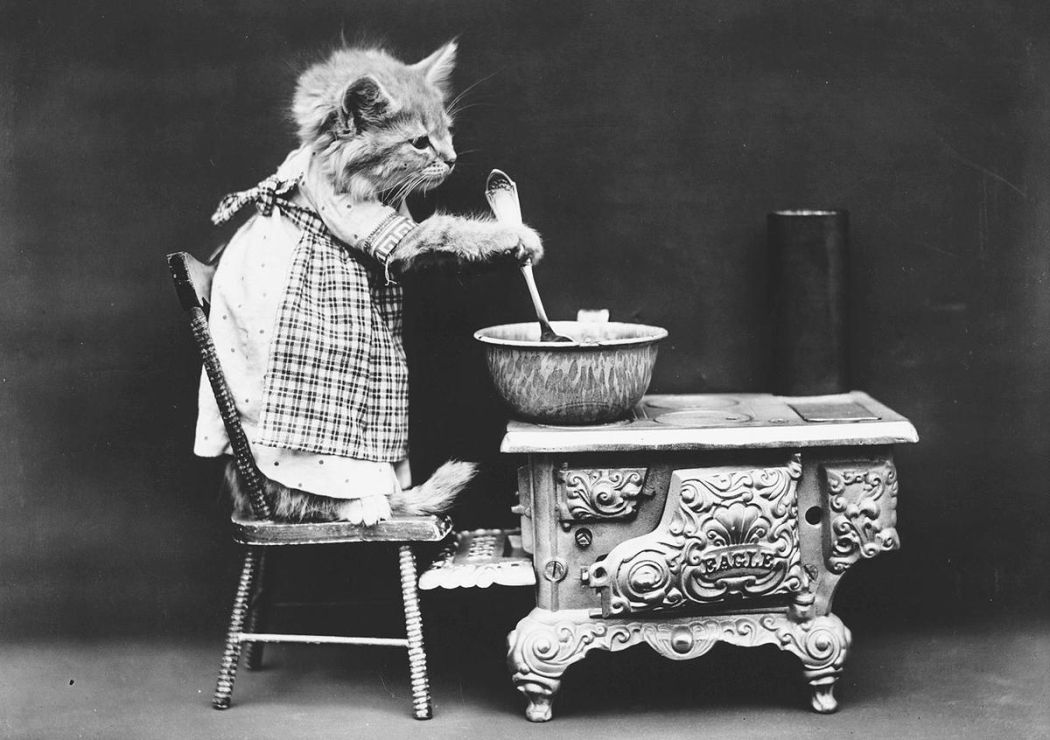 Cats-and-Dogs-Dressed-as-People-06