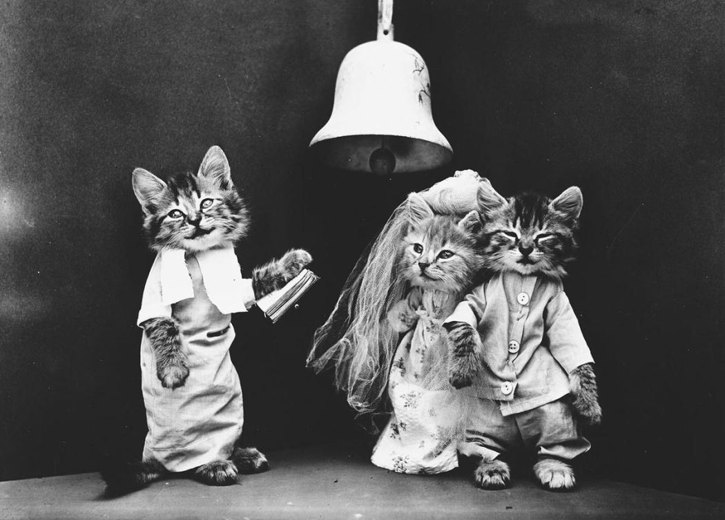 Cats-and-Dogs-Dressed-as-People-08