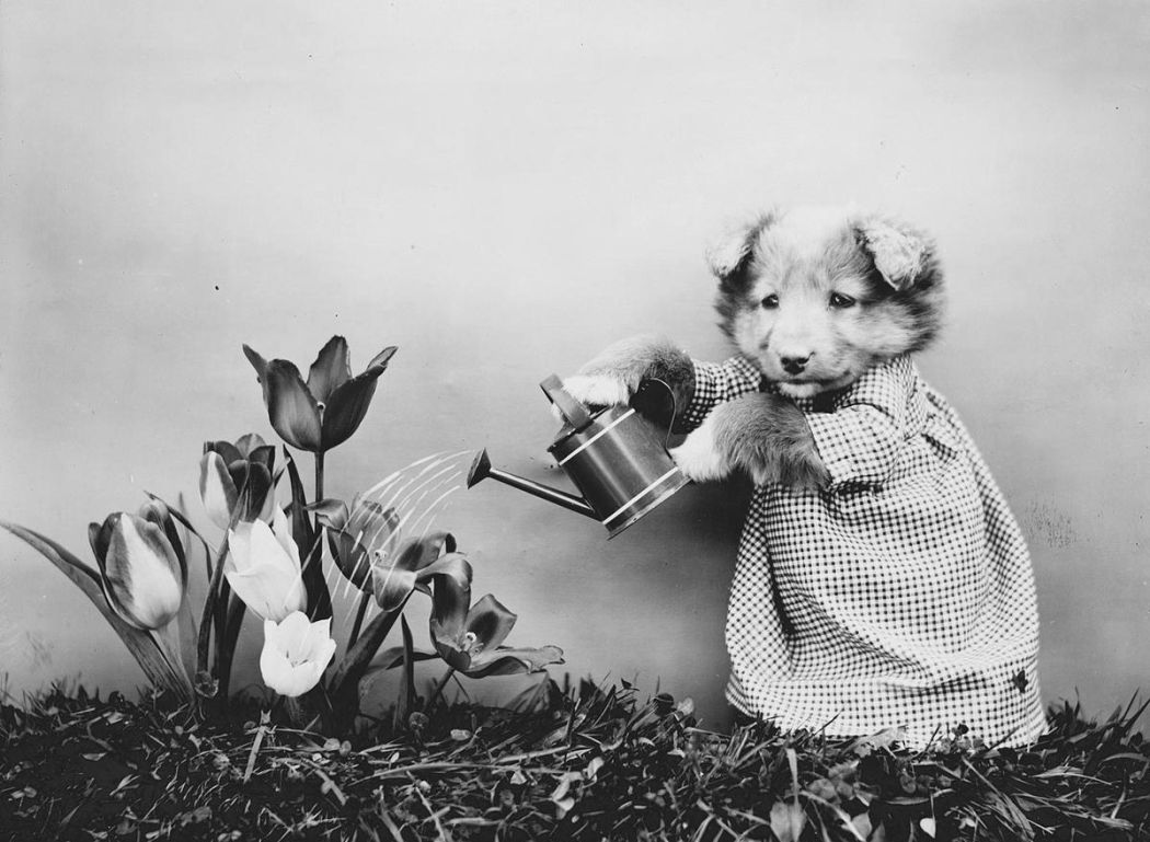 Cats-and-Dogs-Dressed-as-People-09