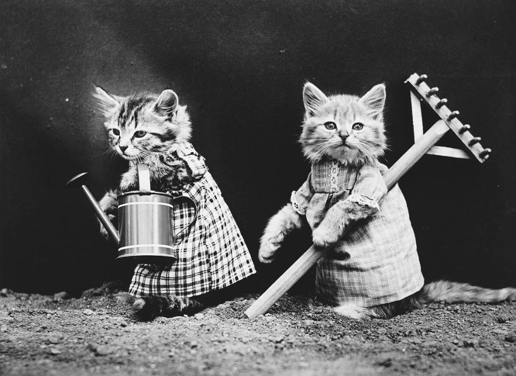 Cats-and-Dogs-Dressed-as-People-10