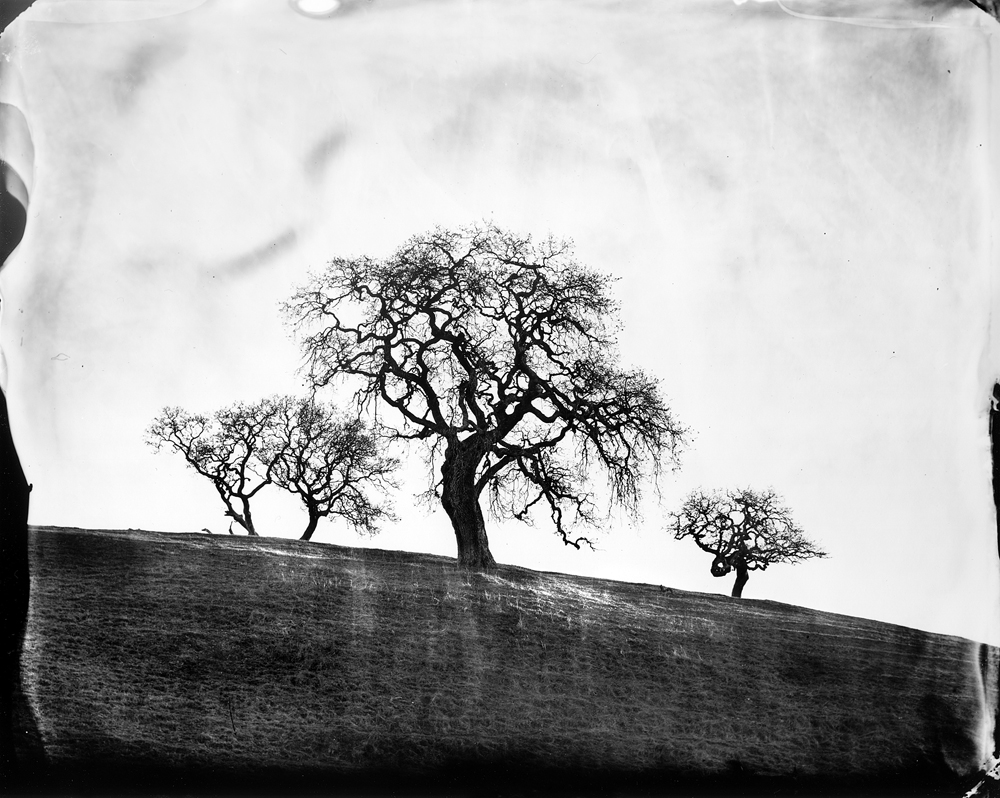 © Ben Nixon Oaks, West Marin