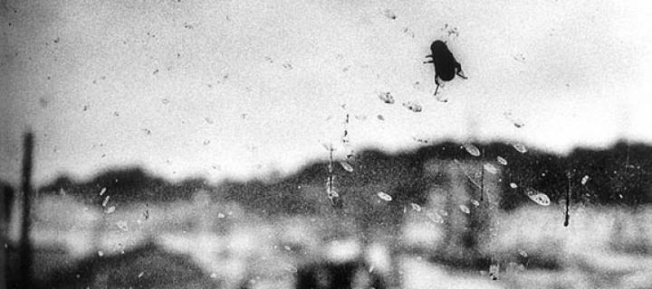 Biography: Documentary/Street photographer Daido Moriyama