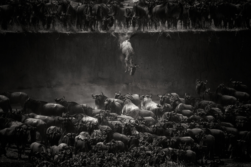The Jump © Nicole Cambre – Wildlife Discovery of the Year 2014, 1st place Winner in Wildlife, Amateur