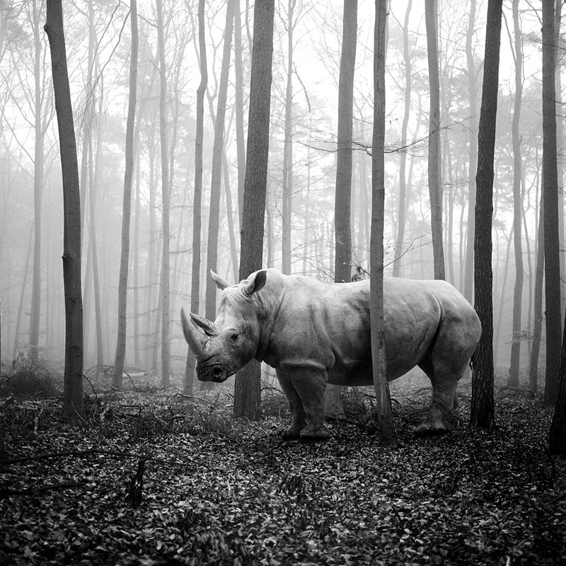 Tierwald#70 © Frank Machalowski – Photomanipulation Photographer of the Year 2014, 1st place Winner in Photomanipulation, Professional