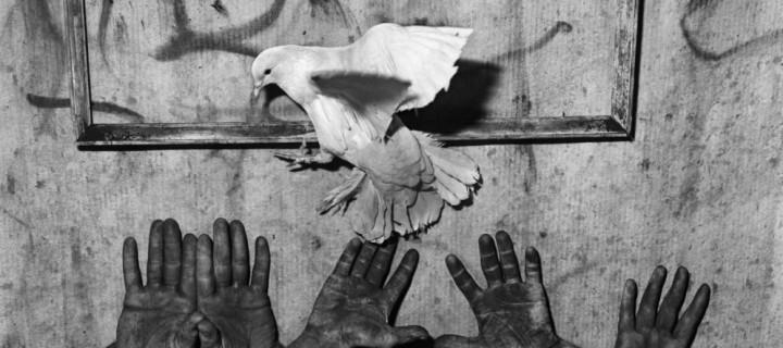 Roger Ballen: Animal Abstraction