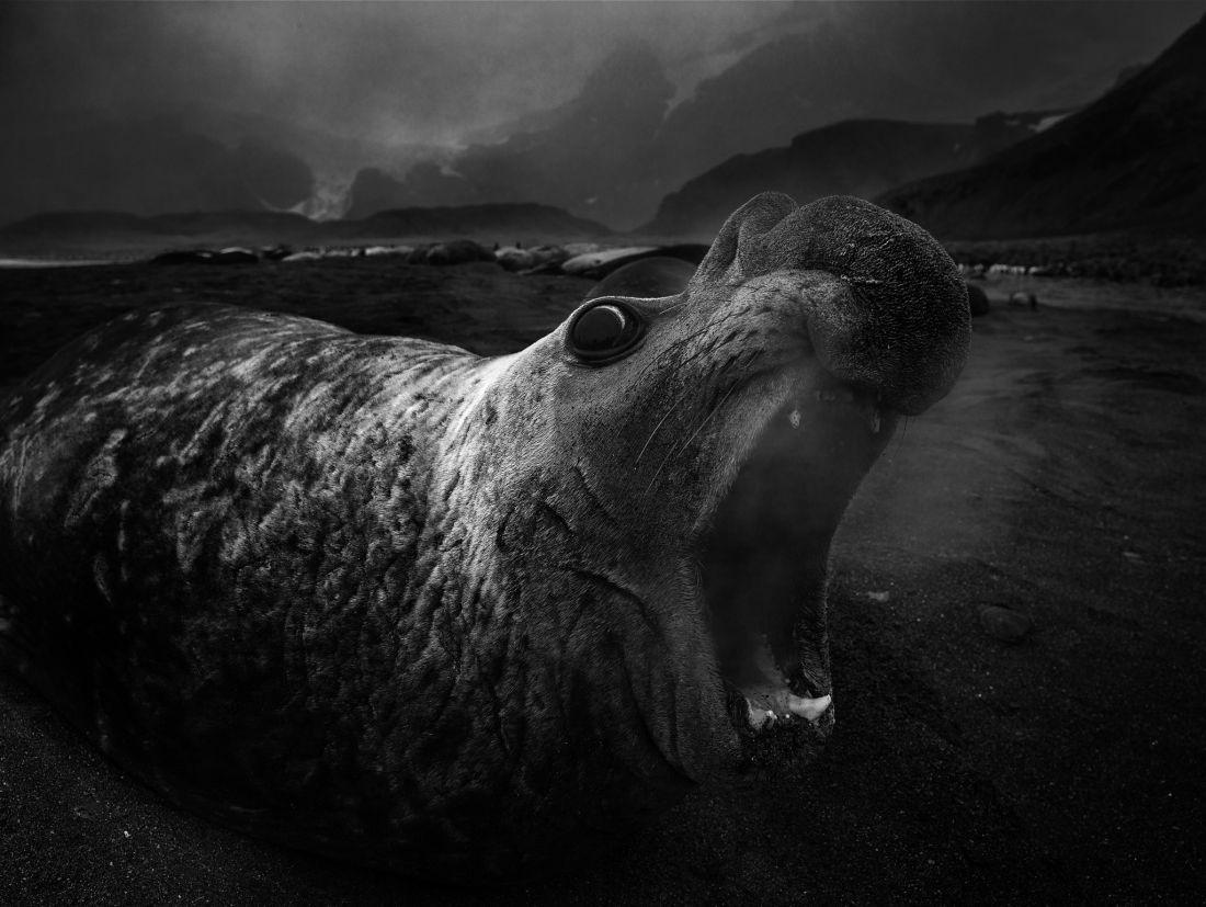 Tomasz-Gudzowaty-Monsters-of-the-Deep-05