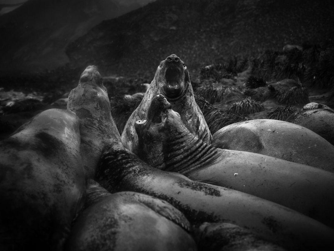 Tomasz-Gudzowaty-Monsters-of-the-Deep-07