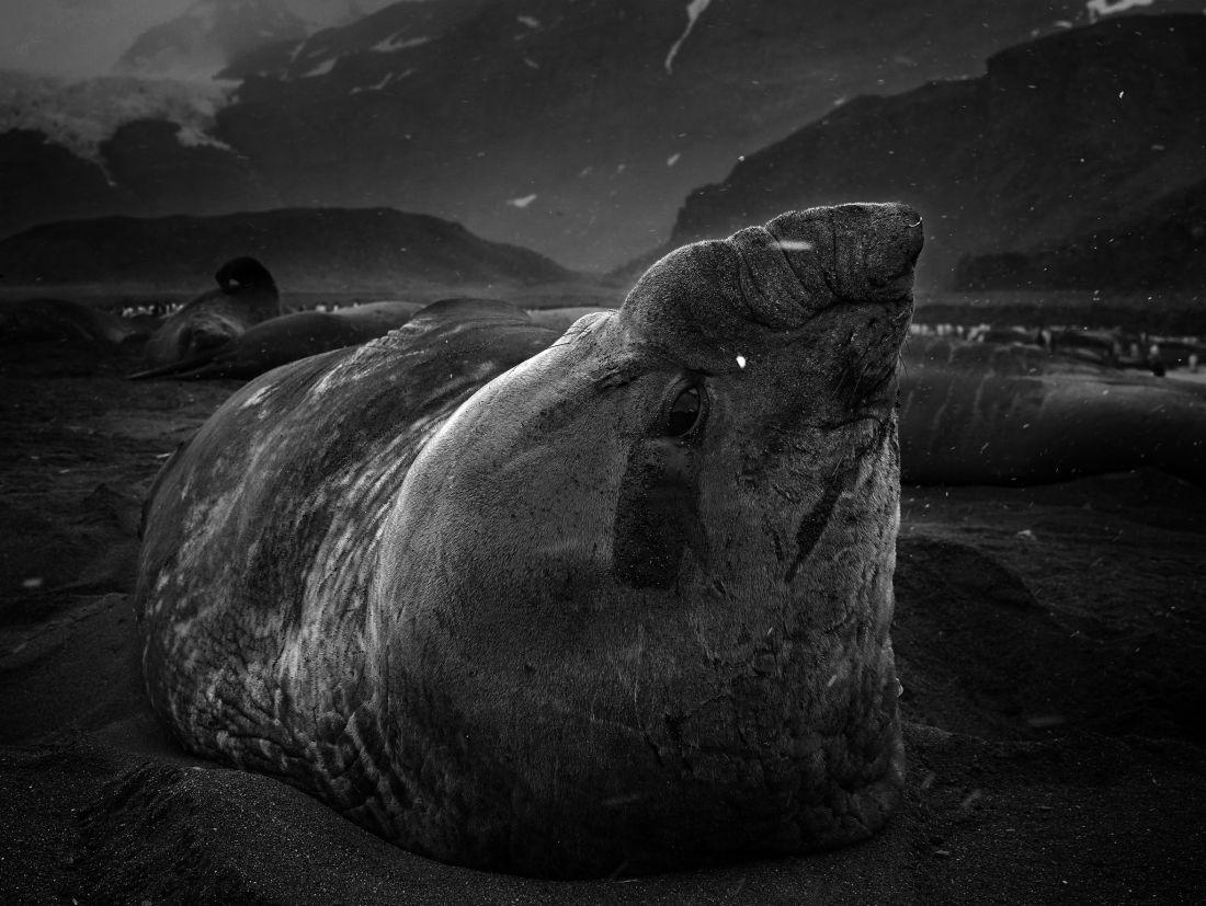 Tomasz-Gudzowaty-Monsters-of-the-Deep-11