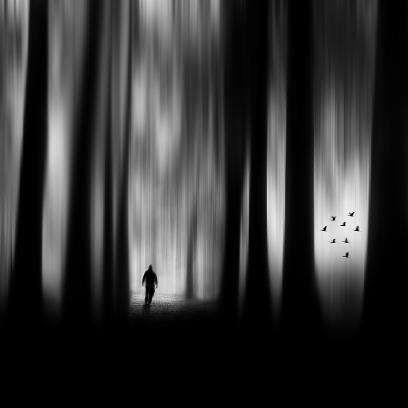 The Forest © Miguel Cabezas – Honorable Mention in Photomanipulation, Amateur