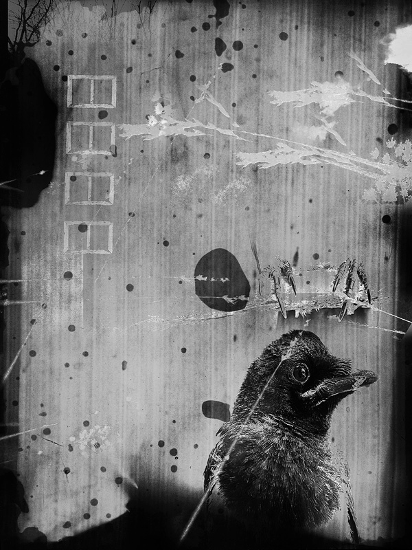 Bird 2 © Irina Kataeva – Honorable Mention in Photomanipulation, Amateur