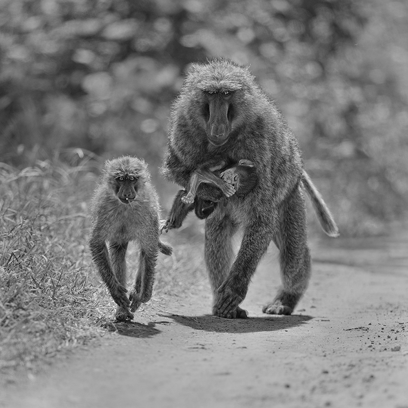 A Mother's Grief  © Annie Katz – Honorable Mention in Wildlife, Professional