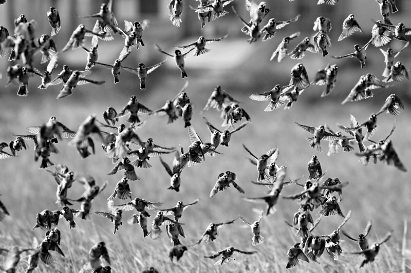 Action © Yingting Shih – Honorable Mention in Wildlife, Professional
