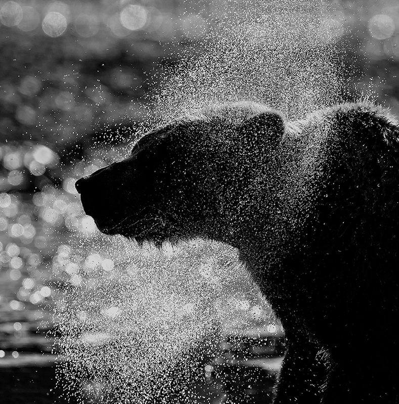 Bear Spray © Annie Katz – Honorable Mention in Wildlife, Professional