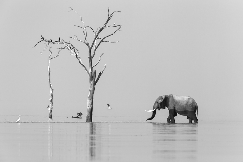 Encounter in Natural Studio © Vincent Gesser – Honorable Mention in Wildlife, Professional