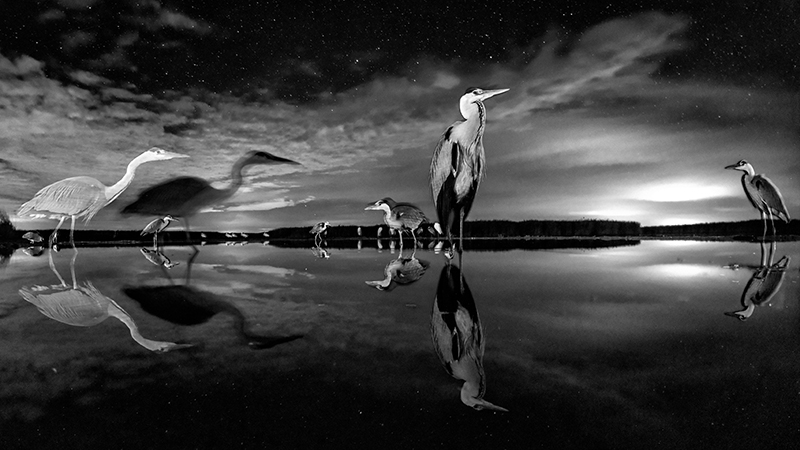 Night Stars © Bence Mate – Honorable Mention in Wildlife, Professional