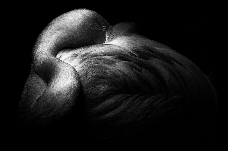 Strange and Powerful © Enrique Pelaez – Honorable Mention in Wildlife, Professional