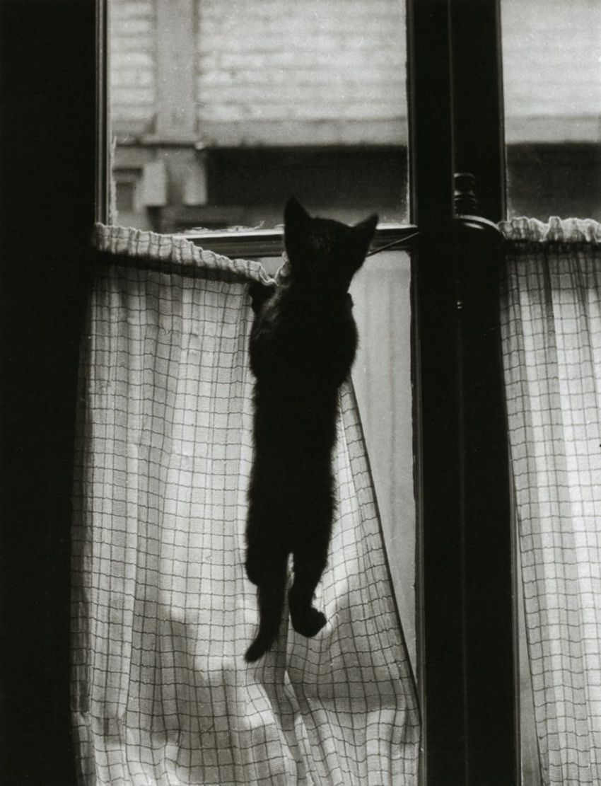 Willy-Ronis-46
