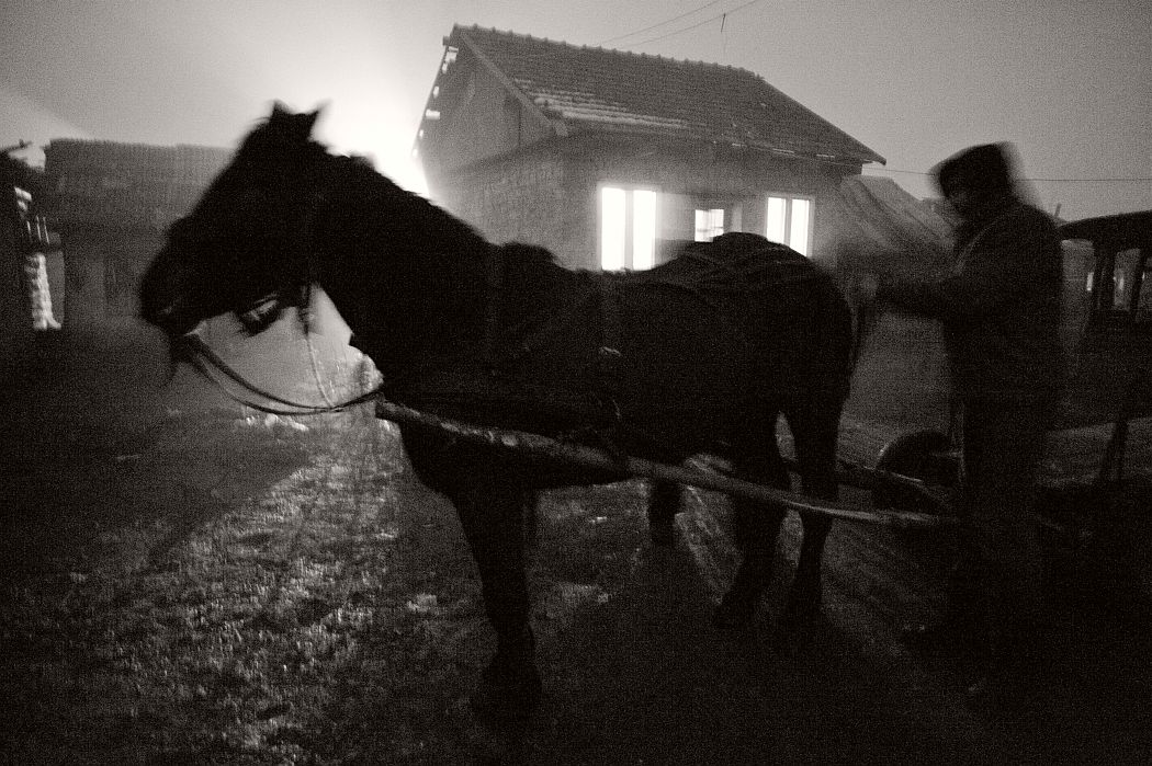 Szabolcs_Ivan_Man preparing horse before going to collect wood