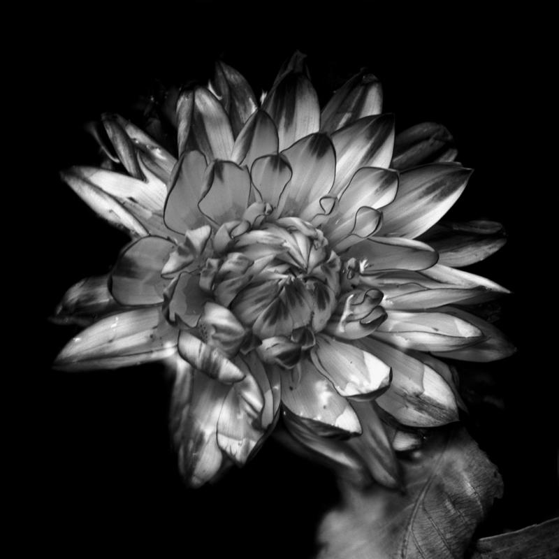bobby-chitrakar-Vibrant Flower
