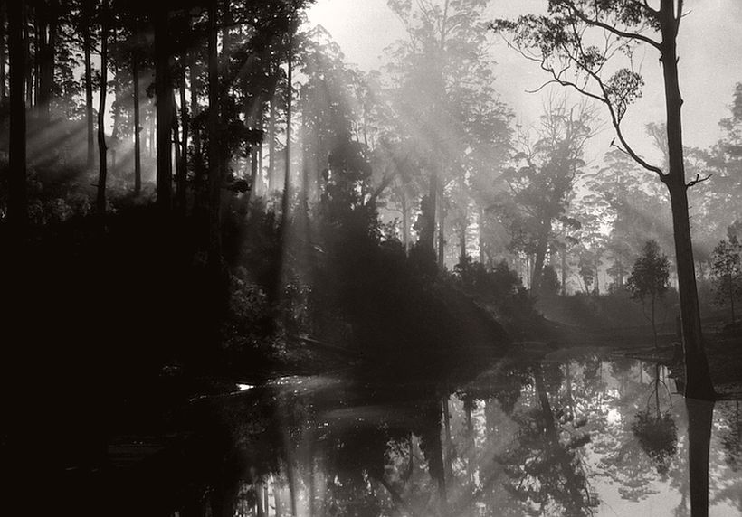 Early morning, Pemberton, Western Australia, 1930, photo: Emil Otto Hoppé