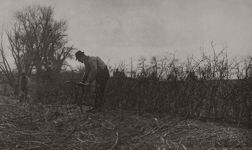 pictorial-rural-life-photographer-peter-henry-emerson-01