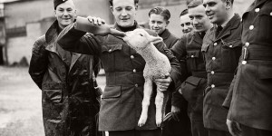 Vintage BW photos of Animals and Soldiers during World War II (1940s)