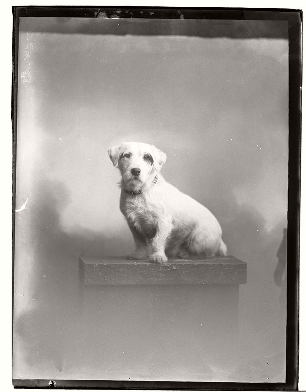 vintage-glass-wet-plate-collodion-portraits-of-pets-1910s-08
