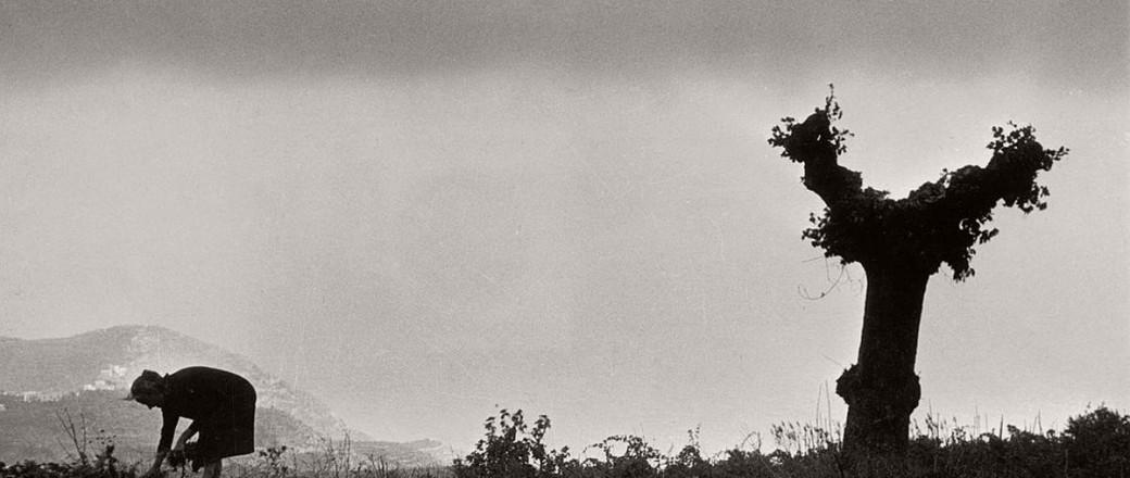 Henri Cartier-Bresson: Landscapes