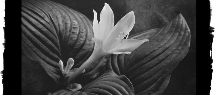 Cy DeCosse: Midnight Garden