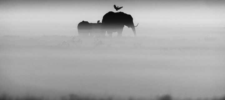 Laurent Baheux: The Family Album of Wild Africa