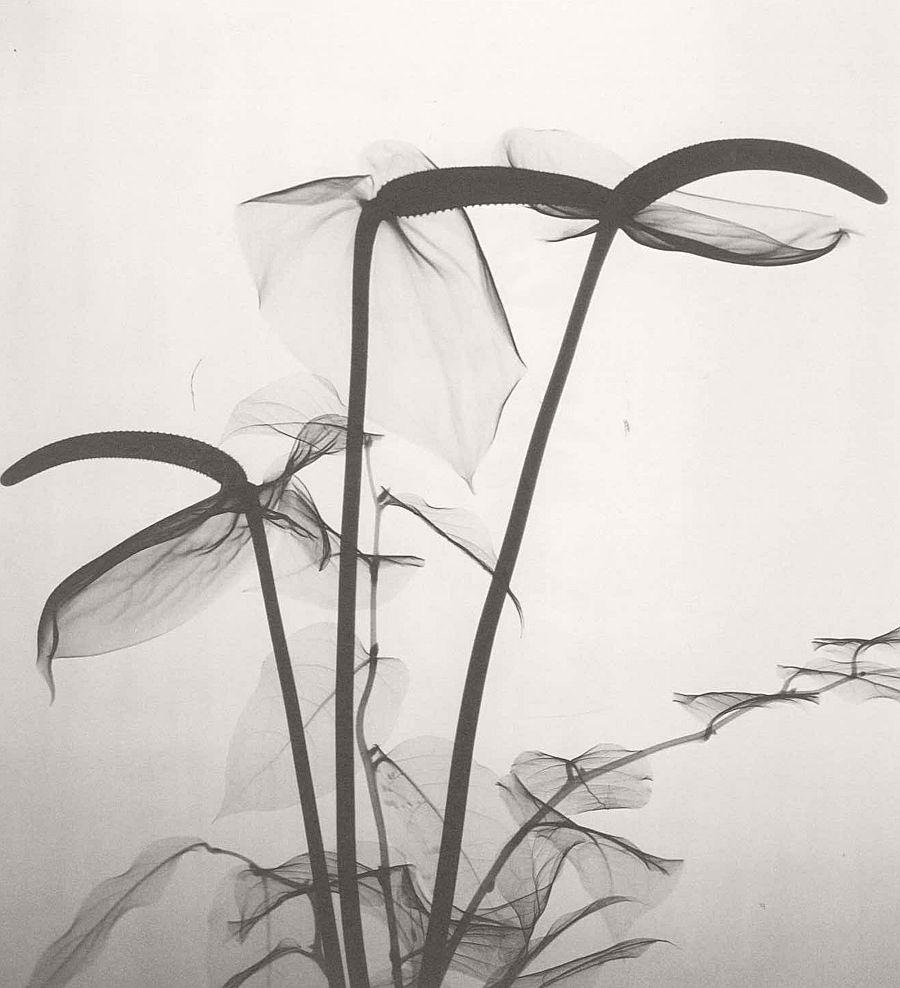 dr-dain-l-tasker-floral-studies-03