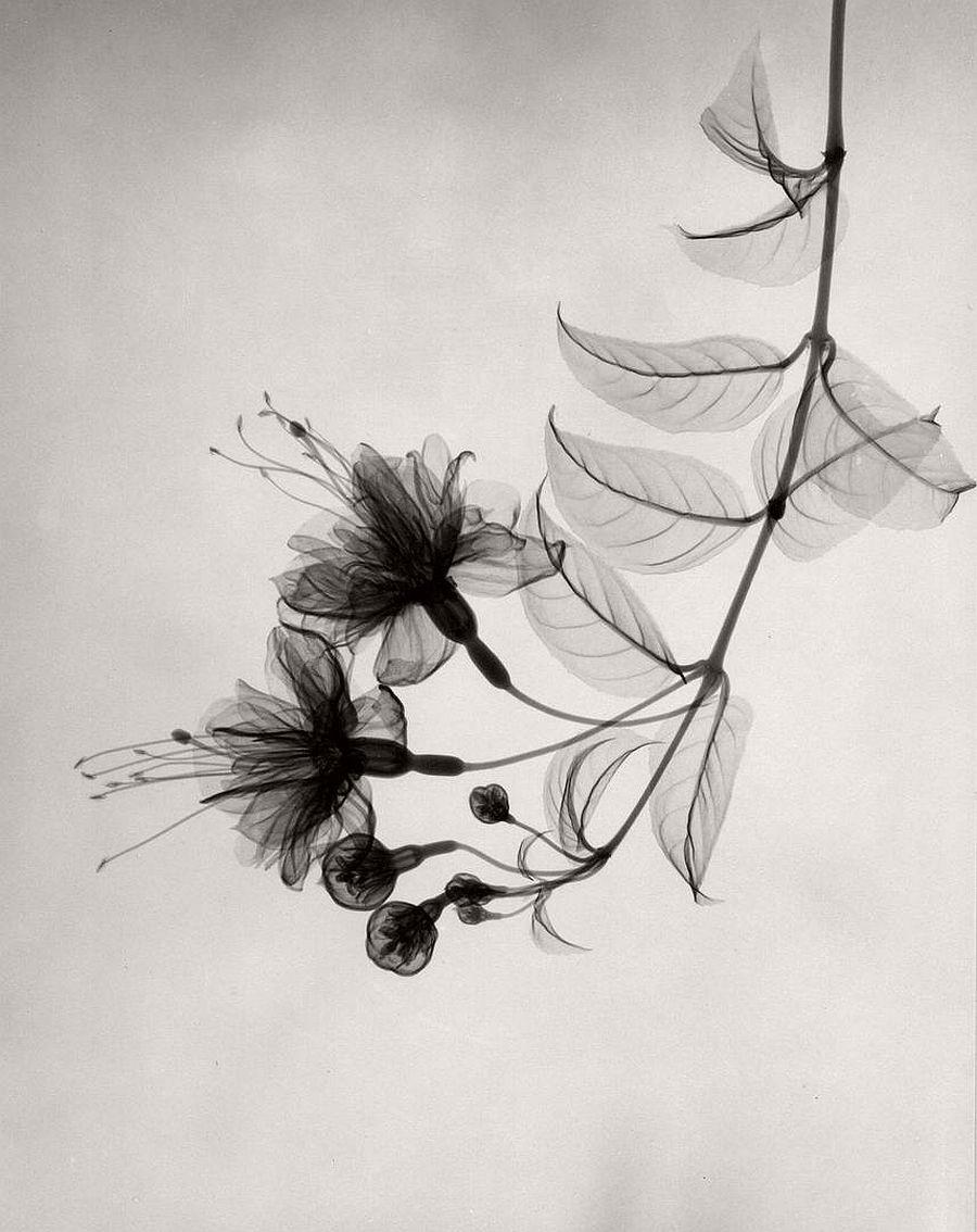 dr-dain-l-tasker-floral-studies-06