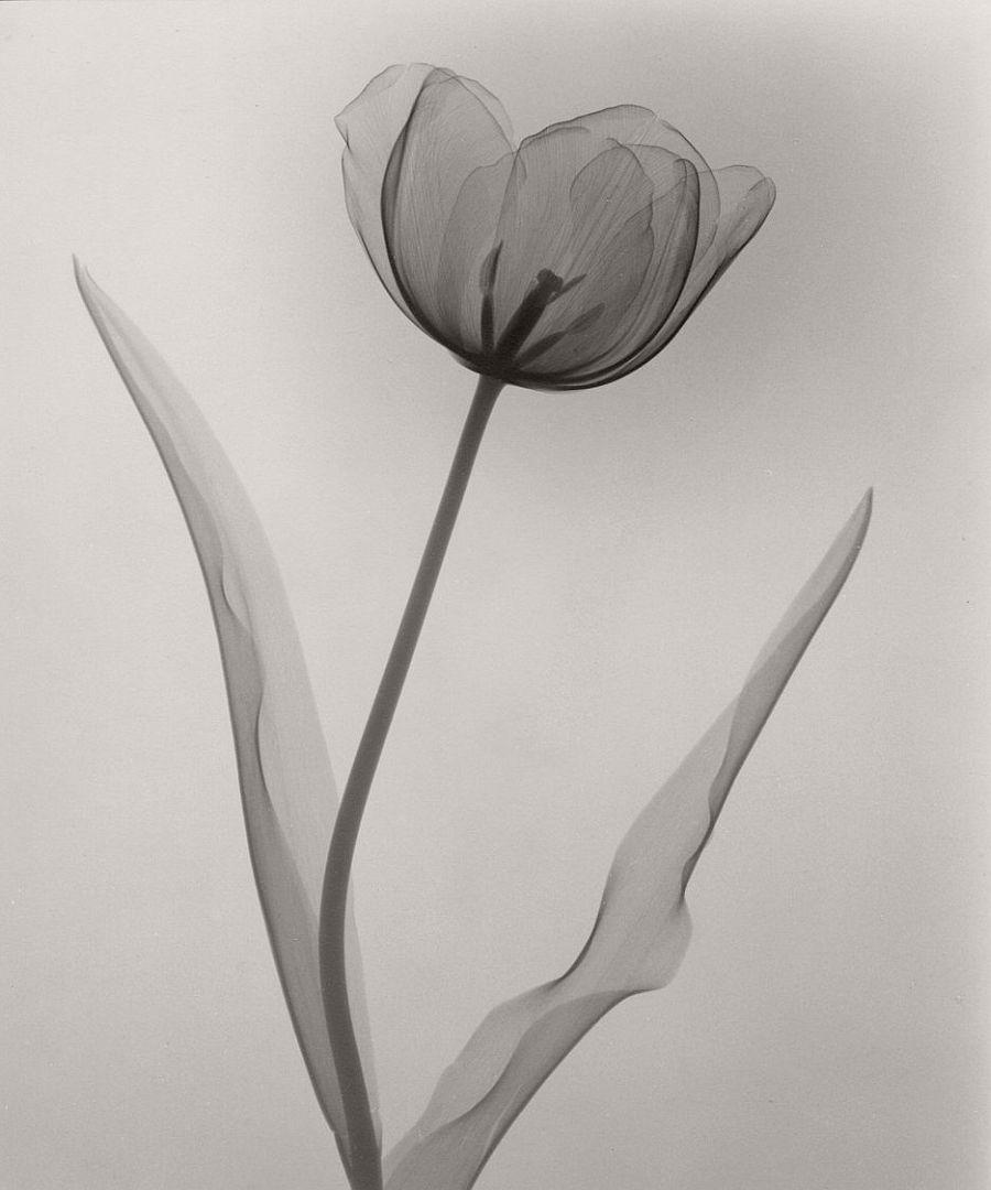 dr-dain-l-tasker-floral-studies-08